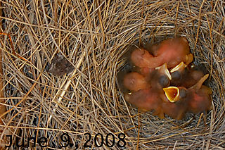 Bluebirds060908dated