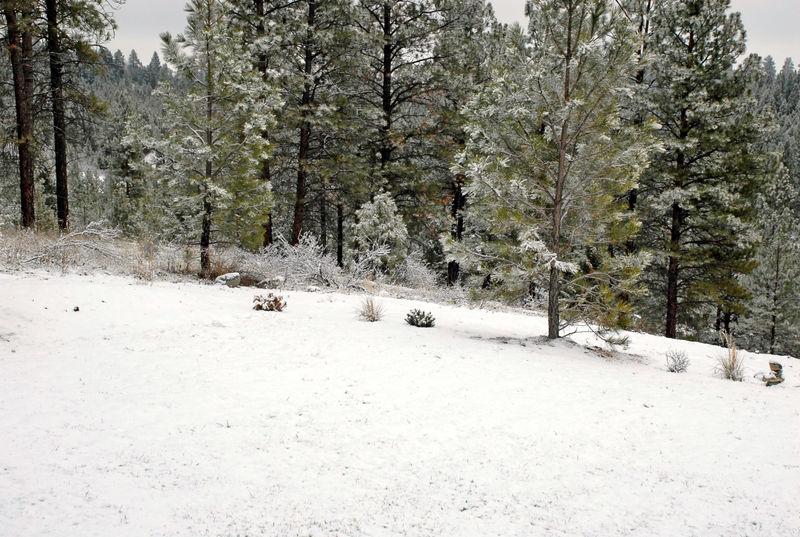 Snowdusting120808_0001_edited-2