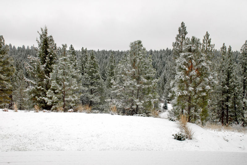 Snowdusting120808_0003_edited-3