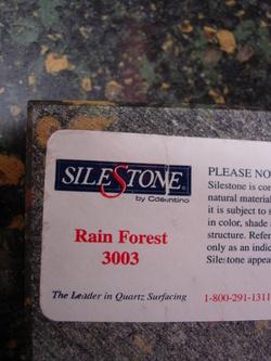 Rainforest_2