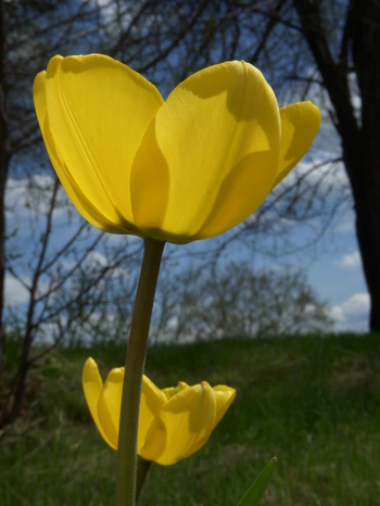 Aprilflowers_2
